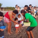 Releasing sea turtles at Campamento Tortuguero: Volunteers work hard to save turtles and educate kids